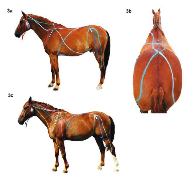Faszien Pferd