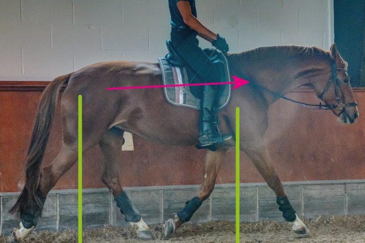 sich selbst tragendes Pferd