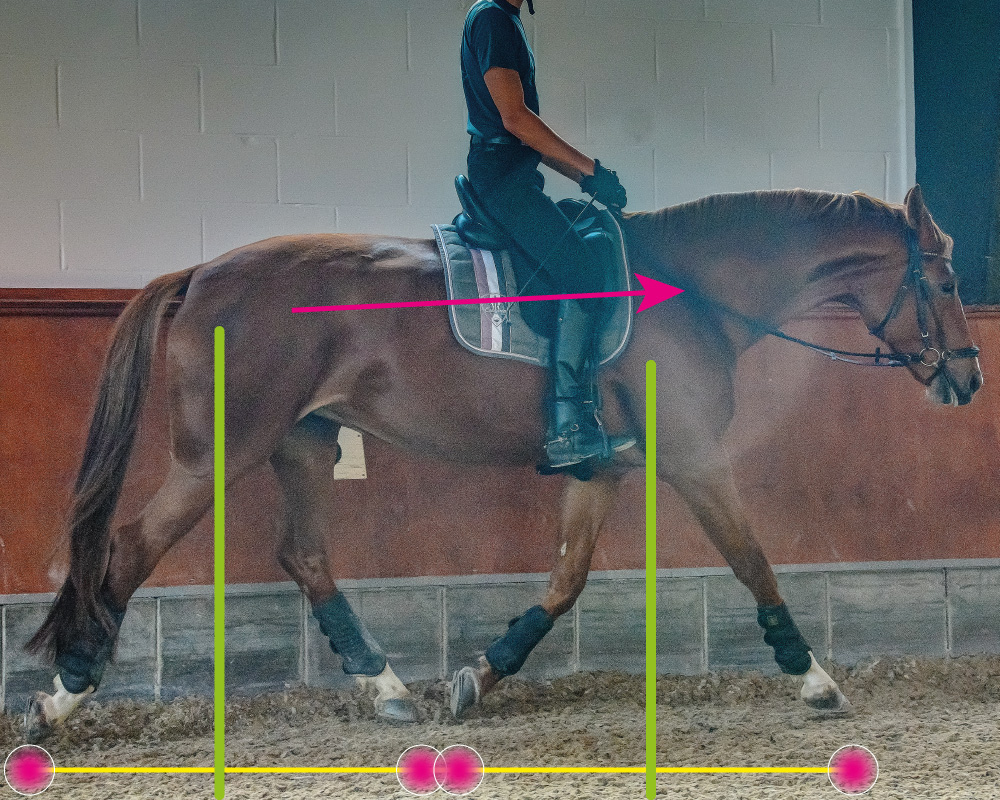 sich selbst tragendes Pferde, vor der Senkrechten