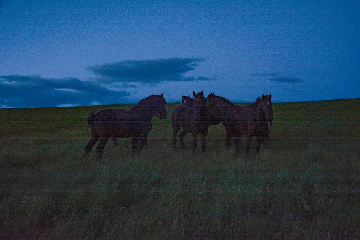 Horsekeeping in apasture at night